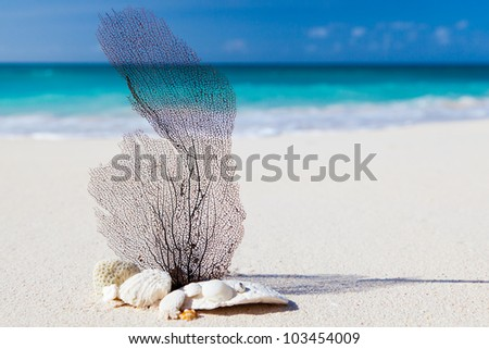 sea and beach concept image - stock photo