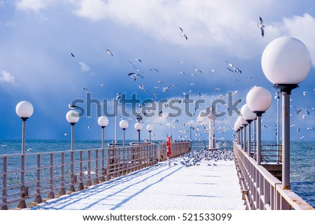sea and blue sky. Sea birds sitting on pier. winter beach. Winter scene