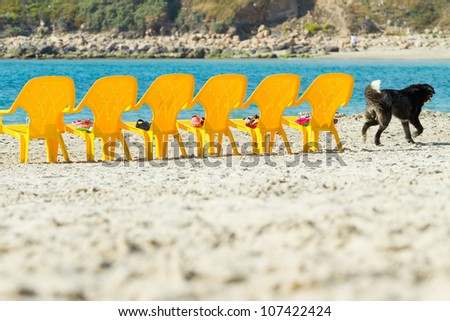 Sea and chairs on the beach and running dog