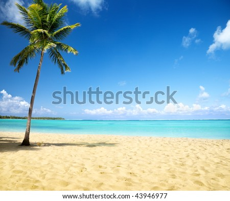 sea and coconut palm - stock photo
