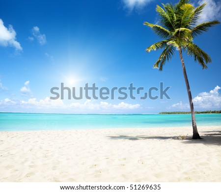 sea and coconut palm - stock photo