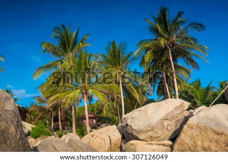 Sea and coconut palm  on rocky beach, Blue sky