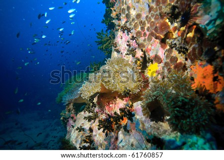 Sea anemone and coral grow cover a rock in the sea
