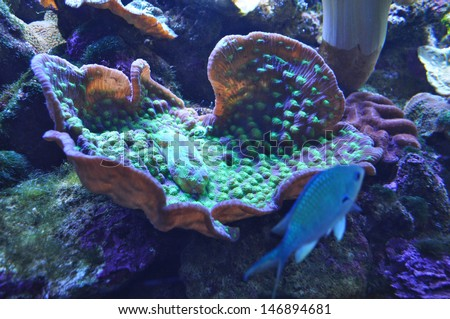 Sea anemone at the Aquarium in Sydney. - stock photo
