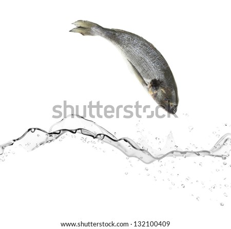 Sea bass fish jumping in the water - stock photo