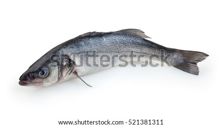Sea-bass isolated on white background with clipping path