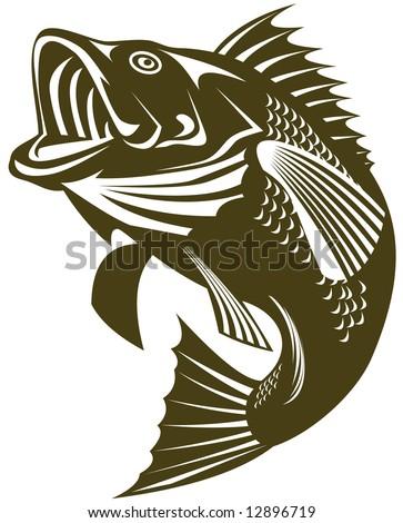 Sea bass jumping - stock photo