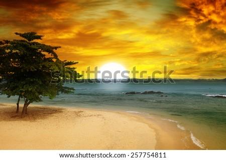 sea beach, a tree and a fantastic sunset - stock photo