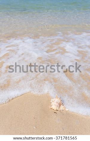 sea beach and shell - stock photo