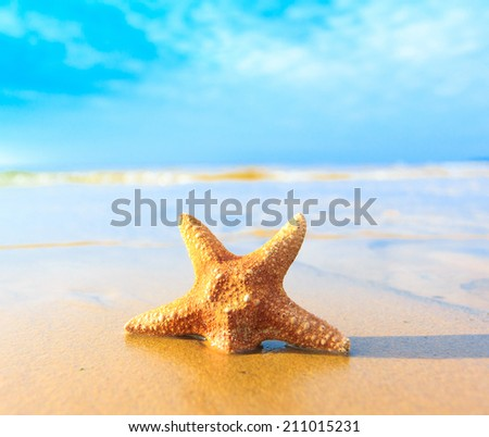 Sea Beach Fish  - stock photo