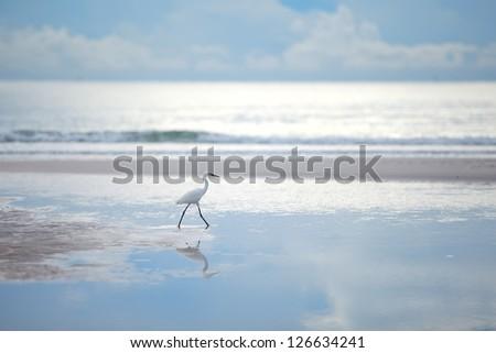 Sea Bird - stock photo