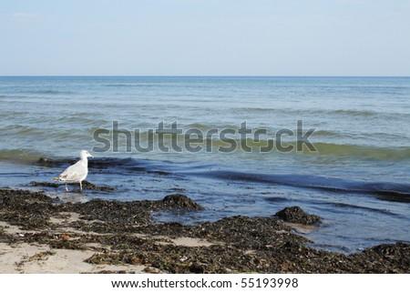 Sea bird on dirty beach - stock photo