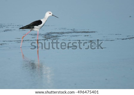 Sea Bird Samutsakorn Thailand