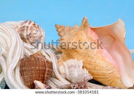 Sea blue background with shell - stock photo