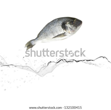 Sea bream fish jumping from water - stock photo