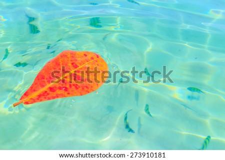 Sea Bright, beautiful at tropical island the Andaman Sea, of Koh Lipe, Thailand - stock photo