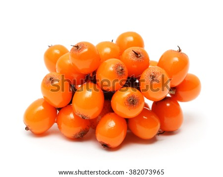Sea buckthorn berries branch isolated on white background - stock photo