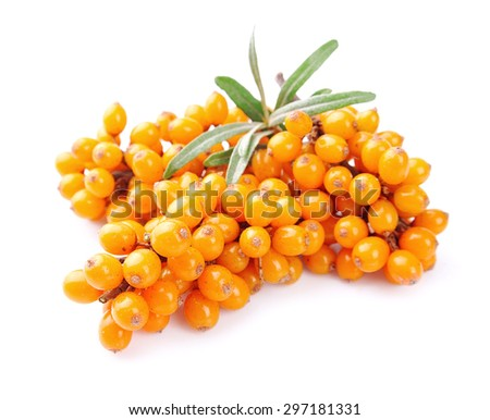 Sea-buckthorn berries branch on a white background - stock photo