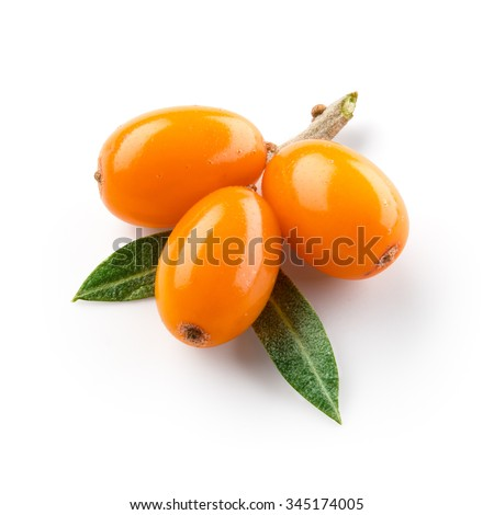 Sea buckthorn isolated on the white. With clipping path. - stock photo