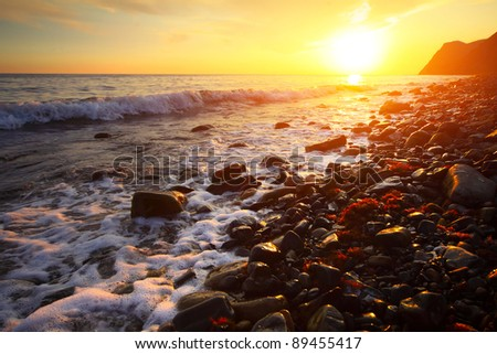 Sea coast with wet rocks and with red algae (Rhodophyta) at sunset light