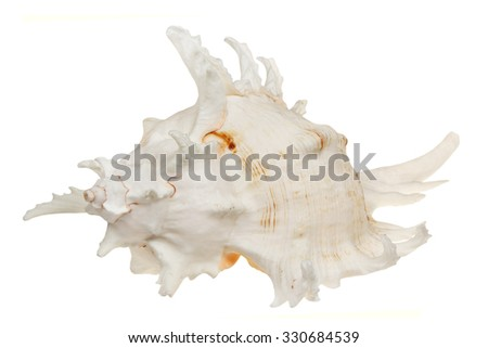 Sea cockleshell it is isolated on a white background - stock photo