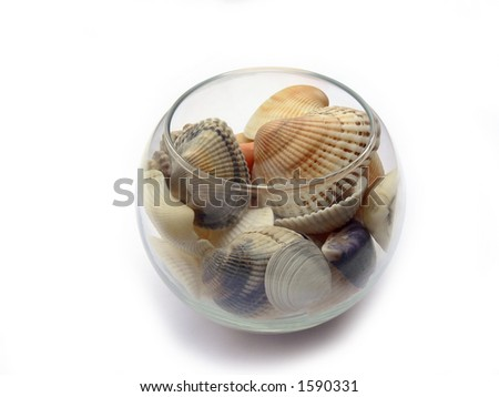 Sea cockleshells in a glass on a white background with shadows