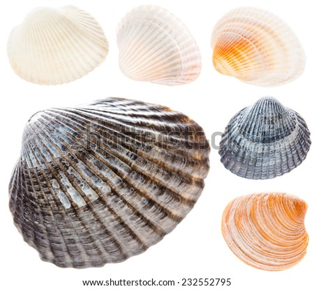 Sea Cockleshells Isolated On White Background. Gray, Brown, White Shells. Set Collage Collection - stock photo
