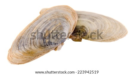 Sea colored shells, close up, isolated, white background. - stock photo
