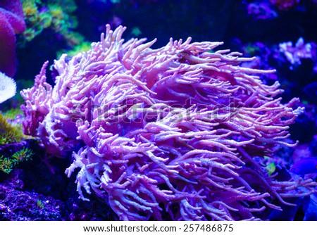 sea corals - stock photo