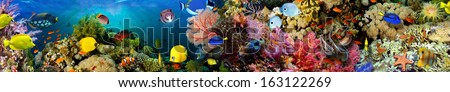 Sea corals. Panorama. - stock photo