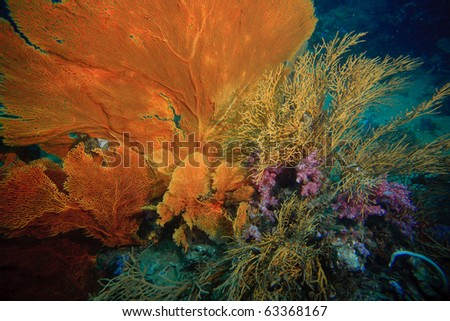 Sea fan and hard coral underwater - stock photo