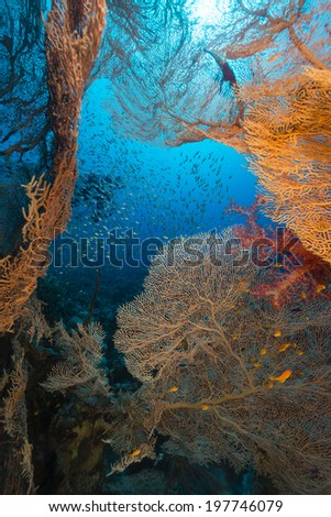 Sea fans and glassfish in the Red Sea - stock photo