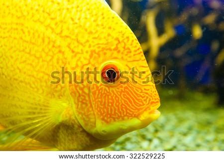 sea fish - stock photo