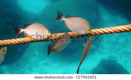 Sea Fish at Koh Tao, Suratthani, Thailand. - stock photo