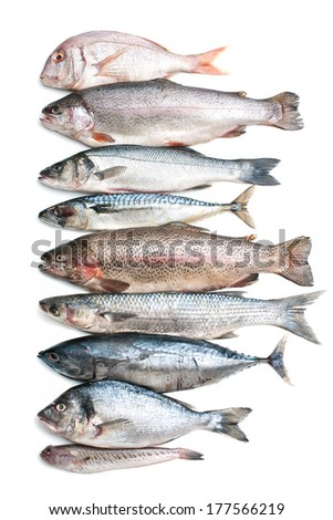 Sea fish collection isolated on white background - stock photo