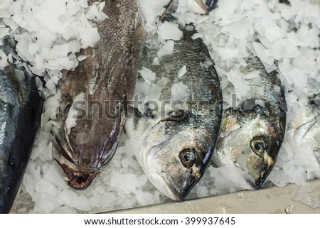Sea fish stored on ice, at fish market.