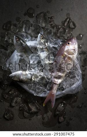 December 2015 berlin head tyrannus saurus stock photo 357807971 sea food in the plastic bag thecheapjerseys Image collections