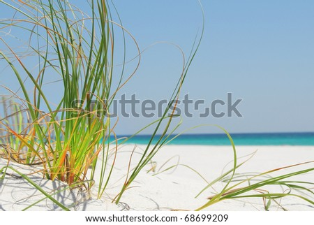 Sea grass on white sand in Pensacola, Florida - stock photo
