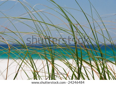 sea grasses at pretty seashore