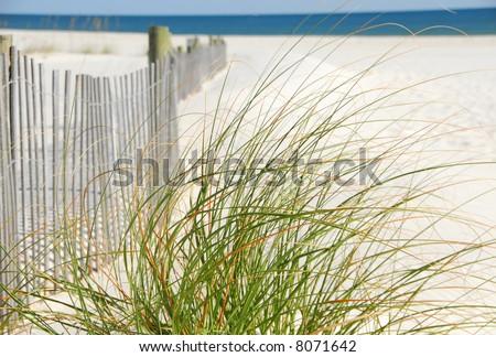 Sea Grasses next to sand dune fence on beach - stock photo