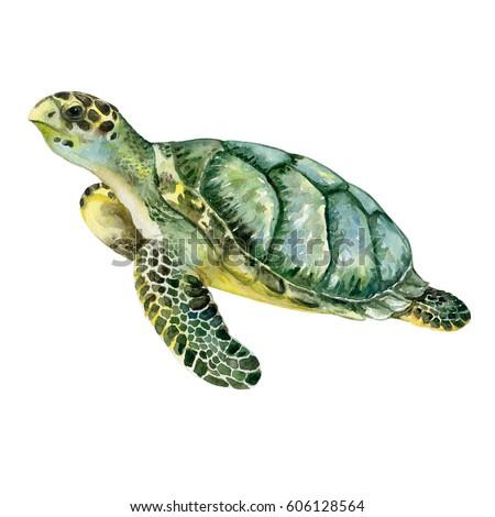 turtle white background - photo #4
