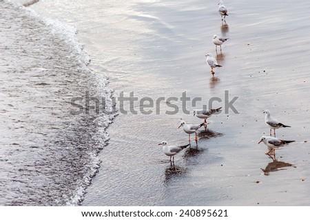 Sea gull birds standing on the sand beach  - stock photo