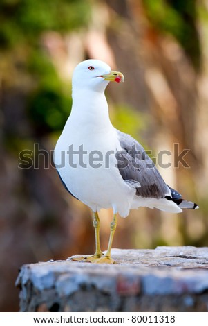 Sea gull gracefully poses for a photo. - stock photo