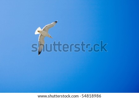 Sea gull in flight on a blue sky - stock photo