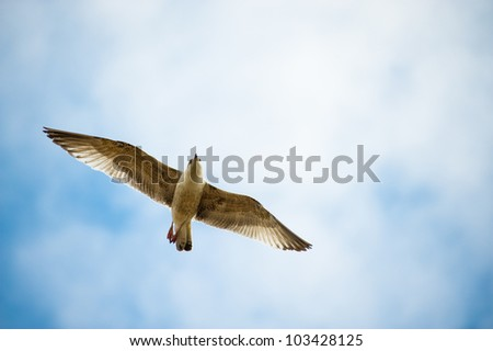 sea gull in the blue sky