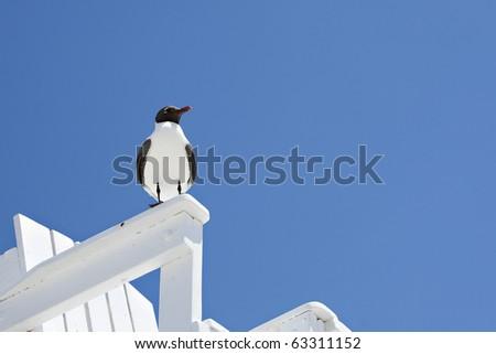 sea gull on beach chair - stock photo