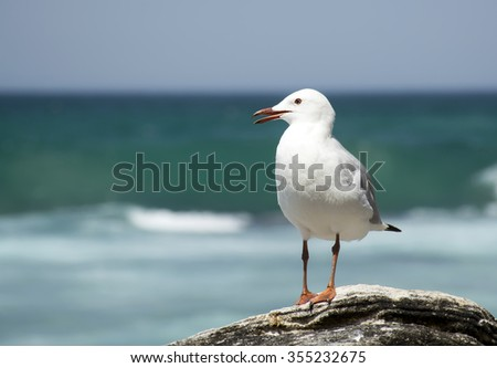 Sea Gull on the beach - stock photo