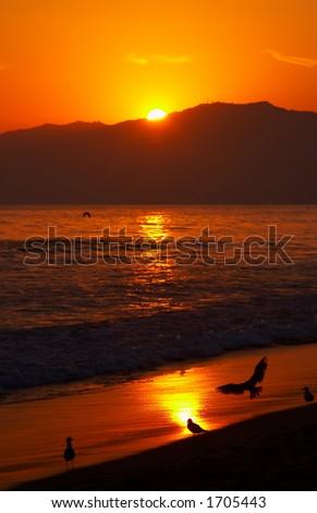Sea gulls at sunset - stock photo