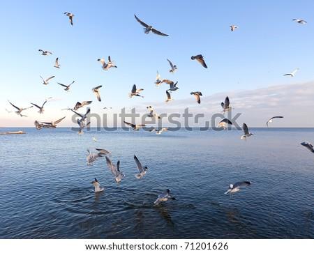sea gulls at the sea - stock photo