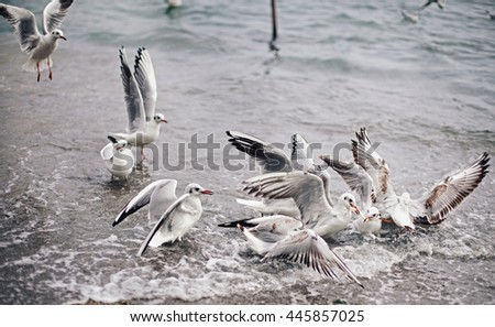 Sea gulls eating food in front sea. - stock photo